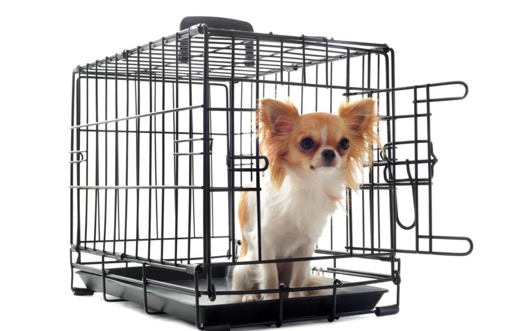 Jaką klatkę kennelową dla psa wybrać w 2020 – Opinie oraz Ranking