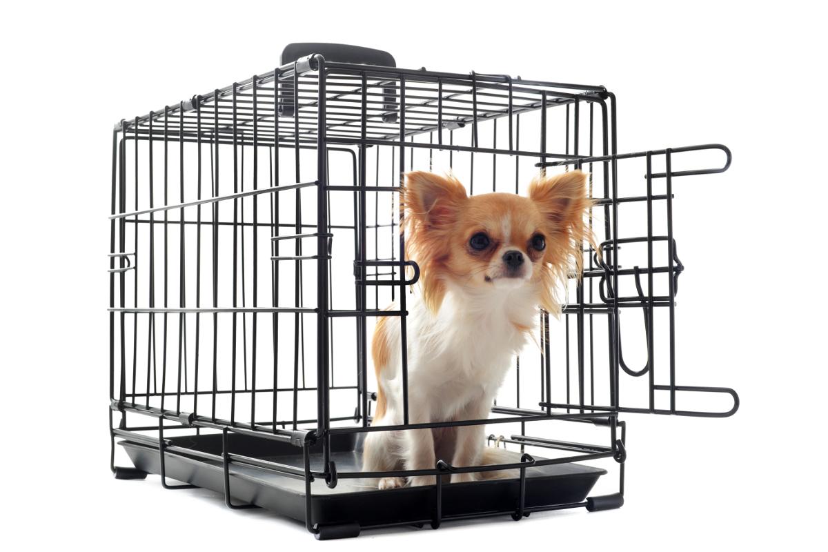 kennel klatka dla psa