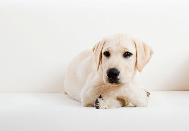 kojec dla psa do domu ranking
