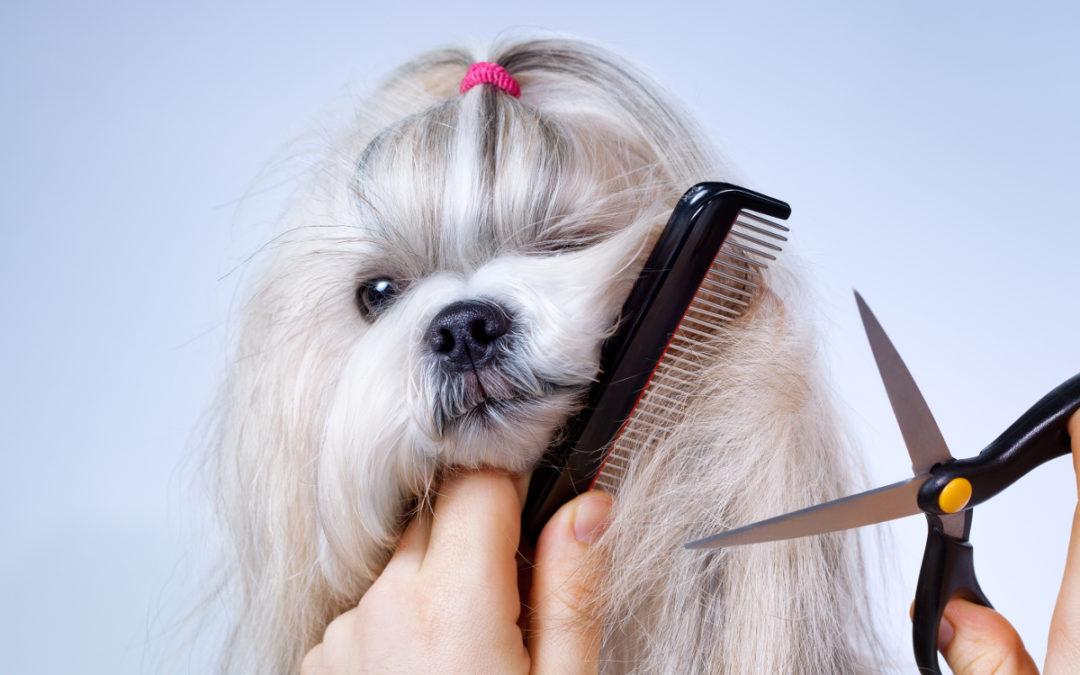 Jakie nożyczki do strzyżenia psów wybrać w 2020 – Opinie oraz Ranking