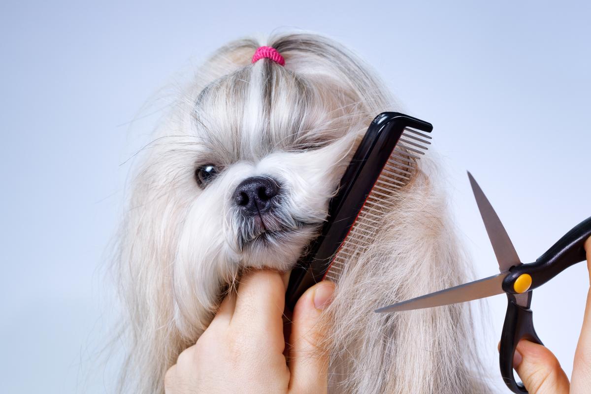 dobre nożyczki dla psów