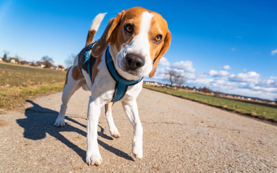 Skuteczna obroża przeciw pchłom i kleszczom dla psa w 2021 – Opinie oraz Ranking