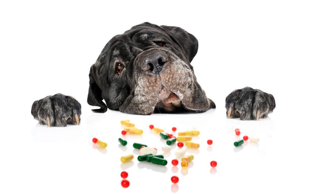 Jakie tabletki na odrobaczenie psa wybrać w 2021 – Opinie oraz Ranking