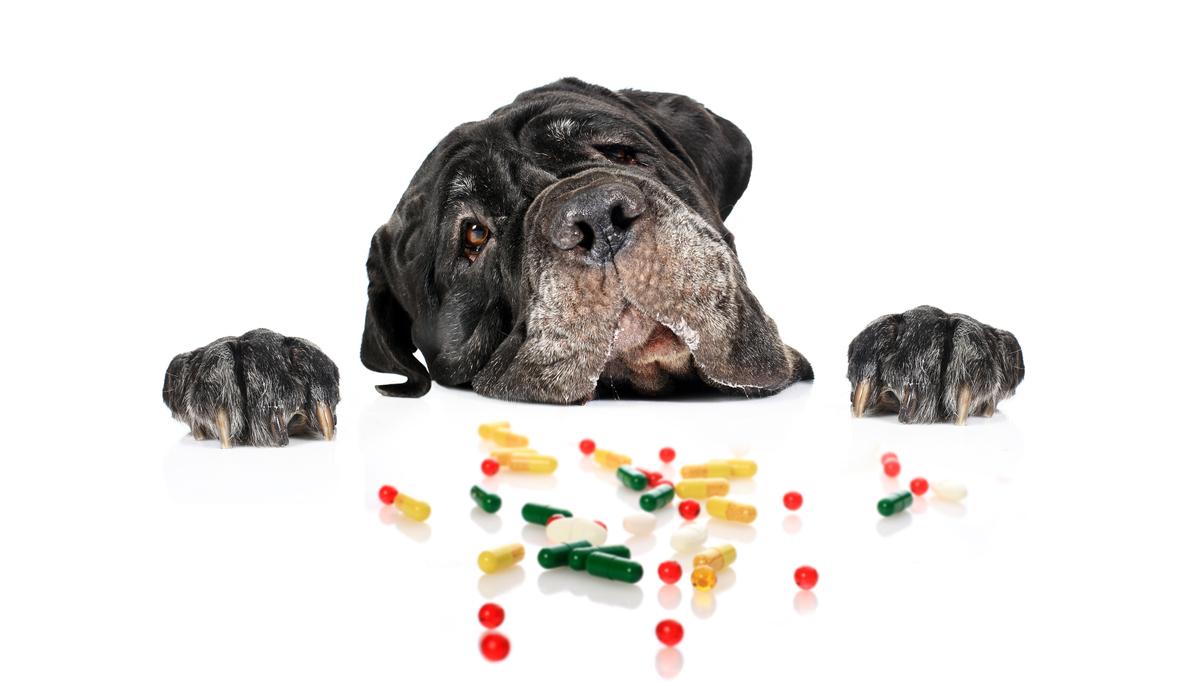 tabletki na odrobaczenie dla psa