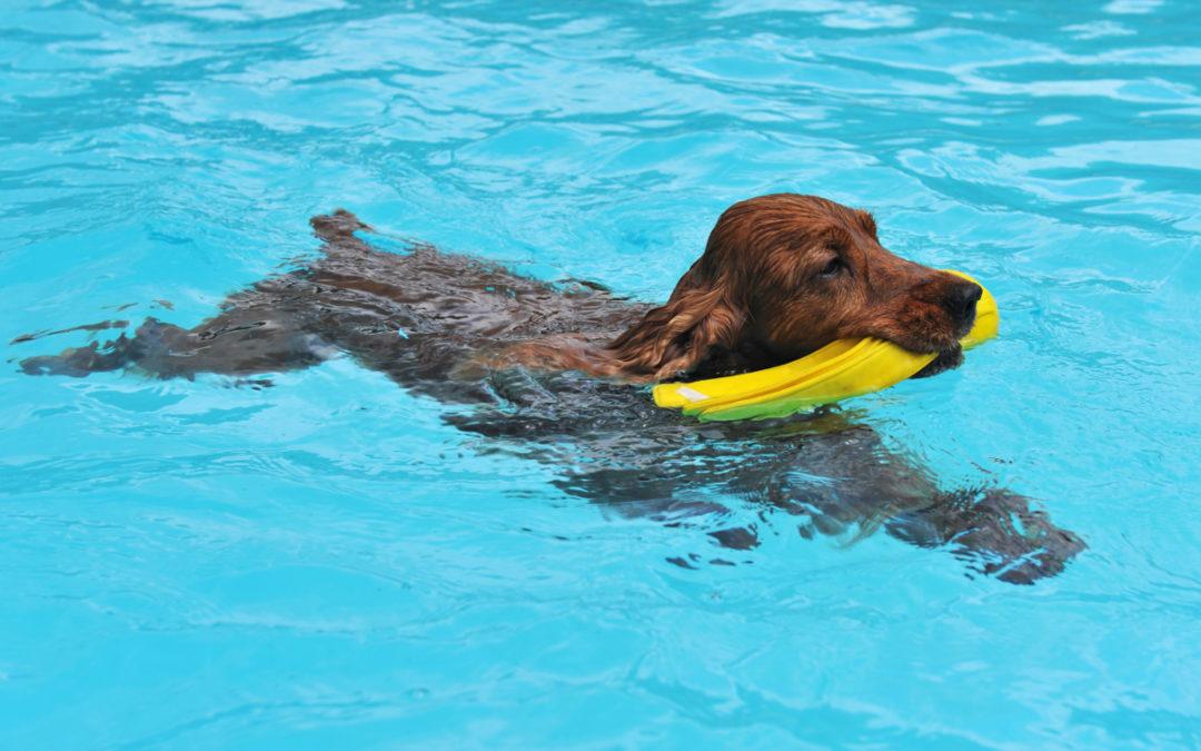 Jaki basen dla psa wybrać w 2021 – Opinie oraz Ranking