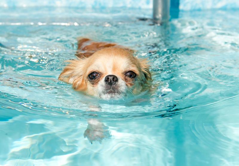najlepszy basen dla psa
