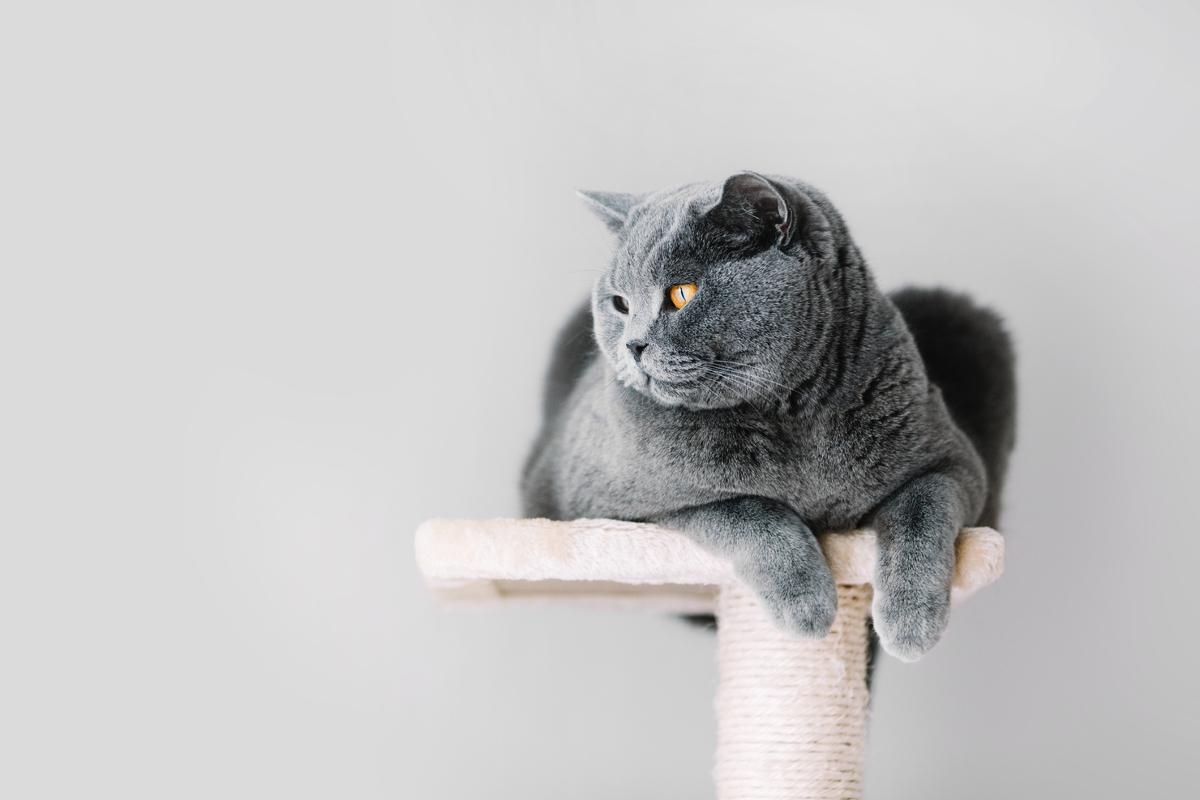 drzewko dla kota
