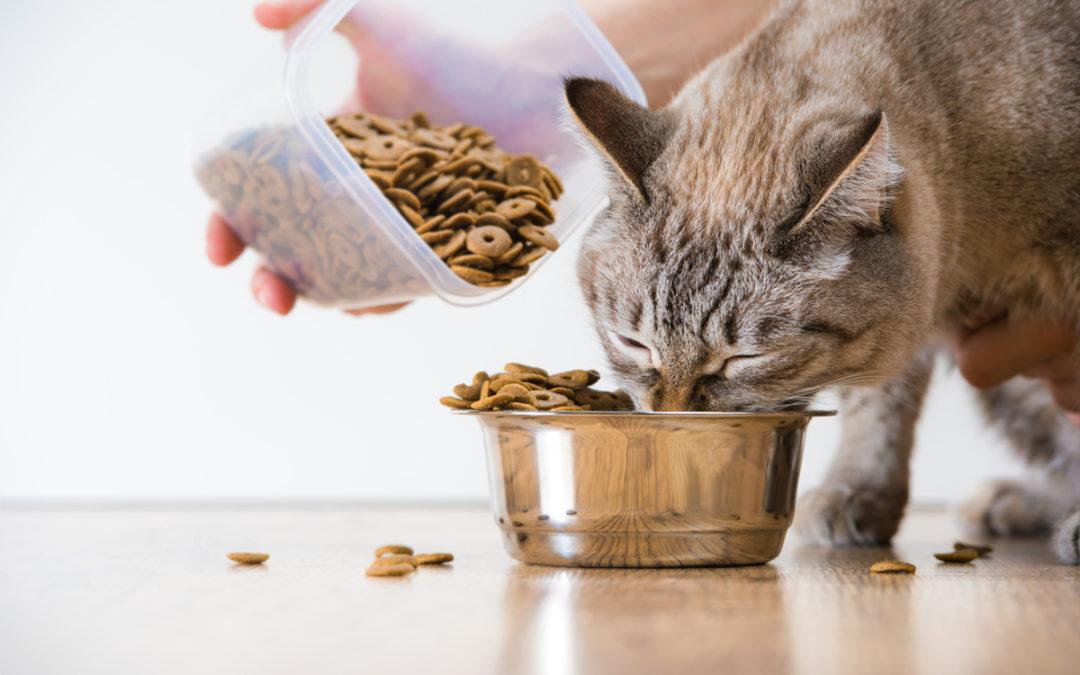 Jaką karmę dla kota wybrać w 2020 – Opinie oraz Ranking