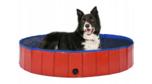 basen dla psa opinie