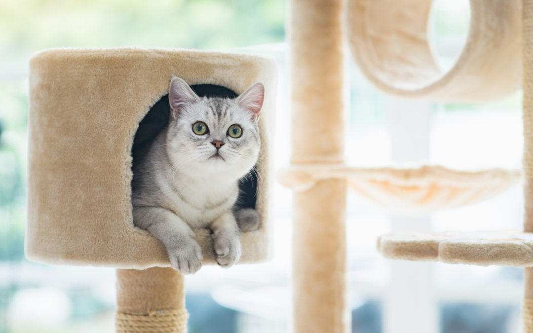 Jak zrobić drapak dla kota z kartonu – Poradnik
