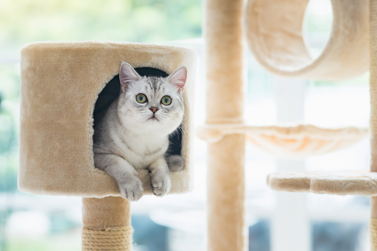 drapak dla kota z kartonu