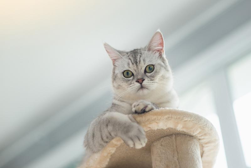 jaki drapak dla kota z kartonu