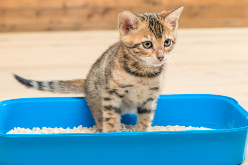 najlepsza kuweta dla kota