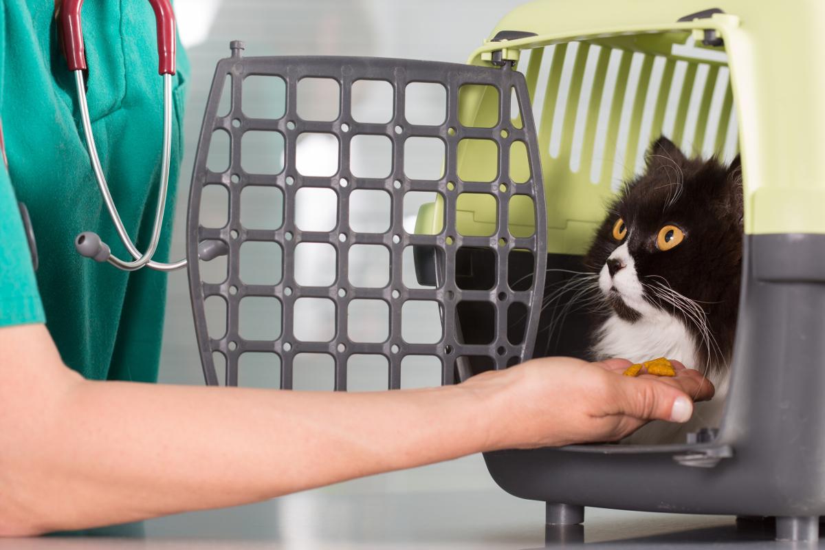 torba transportowa dla kota ranking
