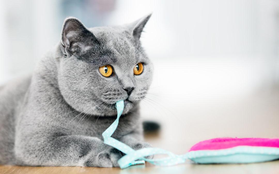 Jakie zabawki dla kota wybrać w 2020 – Opinie oraz Ranking
