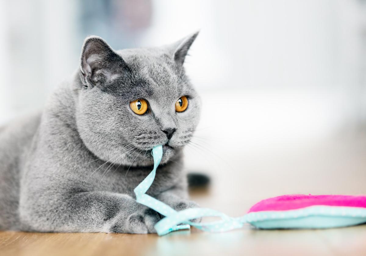 najlepsze zabawki dla kota