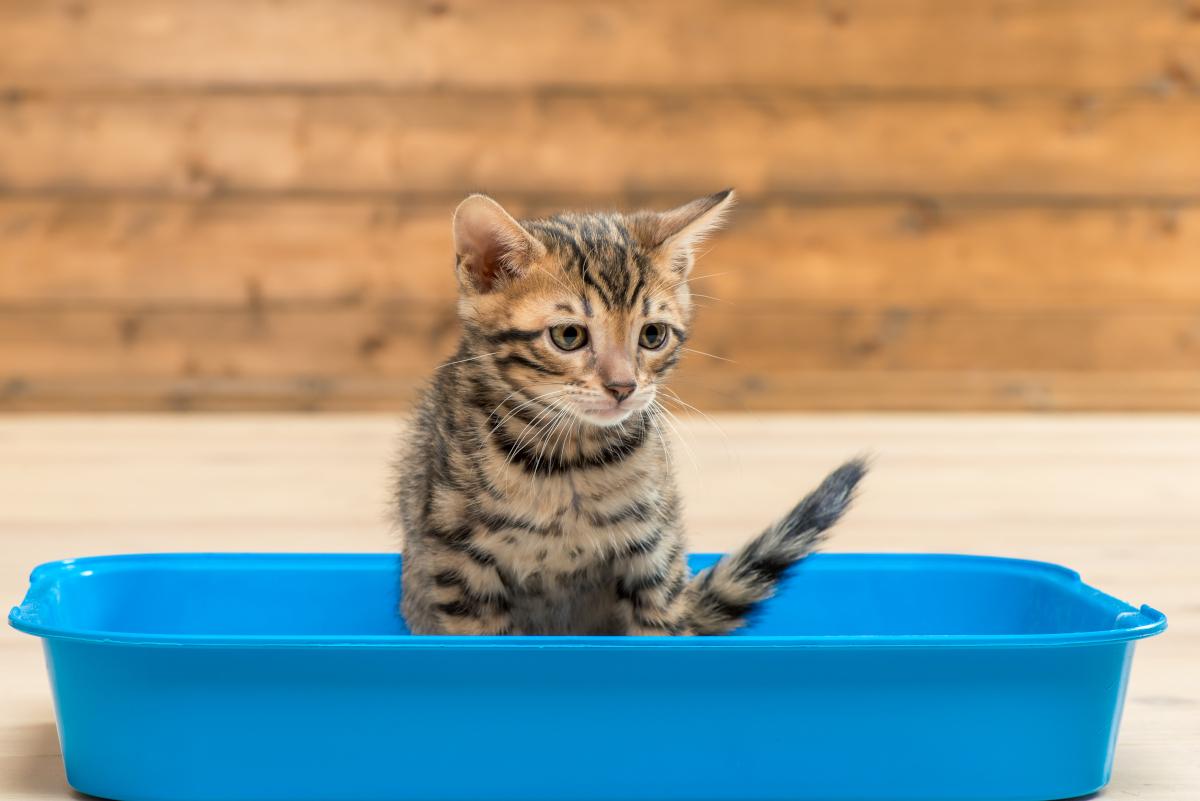 drewniany żwirek dla kota