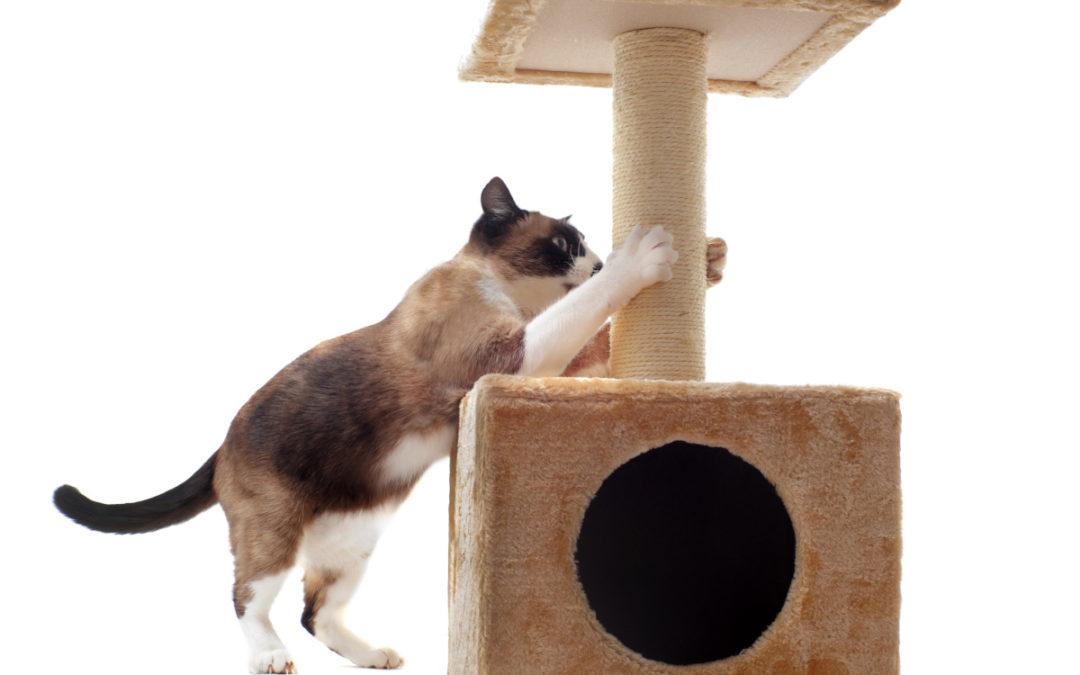 Jaki drapak dla kota wybrać w 2021 – Opinie oraz Ranking