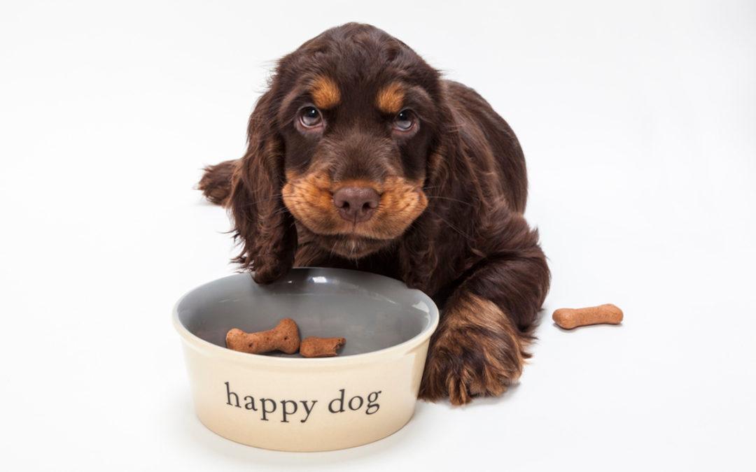 Jaka karma odchudzająca dla psa jest najlepsza w 2021 – Opinie oraz Ranking