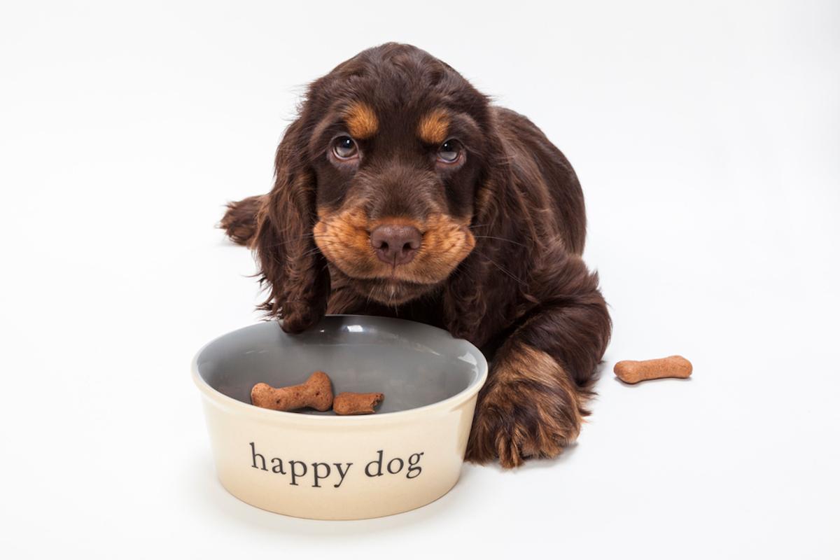 karma odchudzająca dla psa ranking