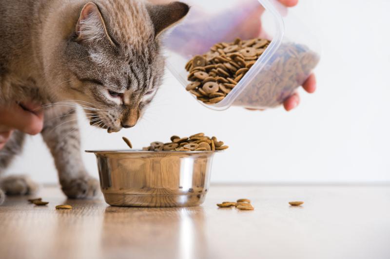 najlepsze karmy dla kotów