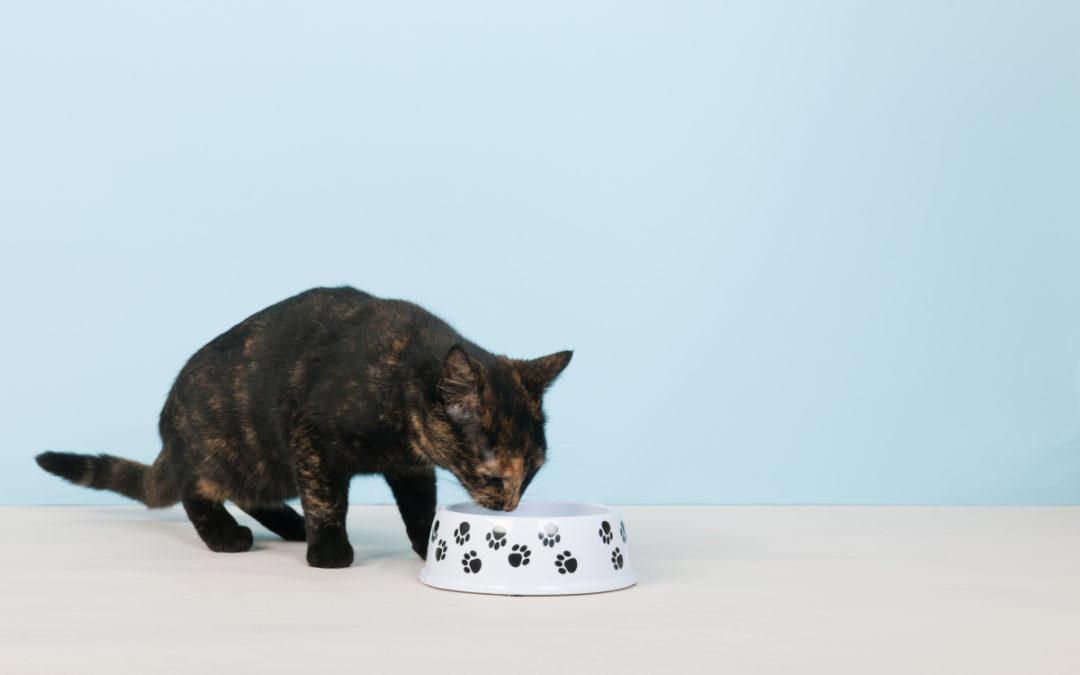 Jaka karma dla kota jest najlepsza w 2021 – Opinie oraz Ranking