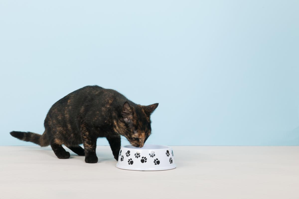 karmy dla kotów opinie