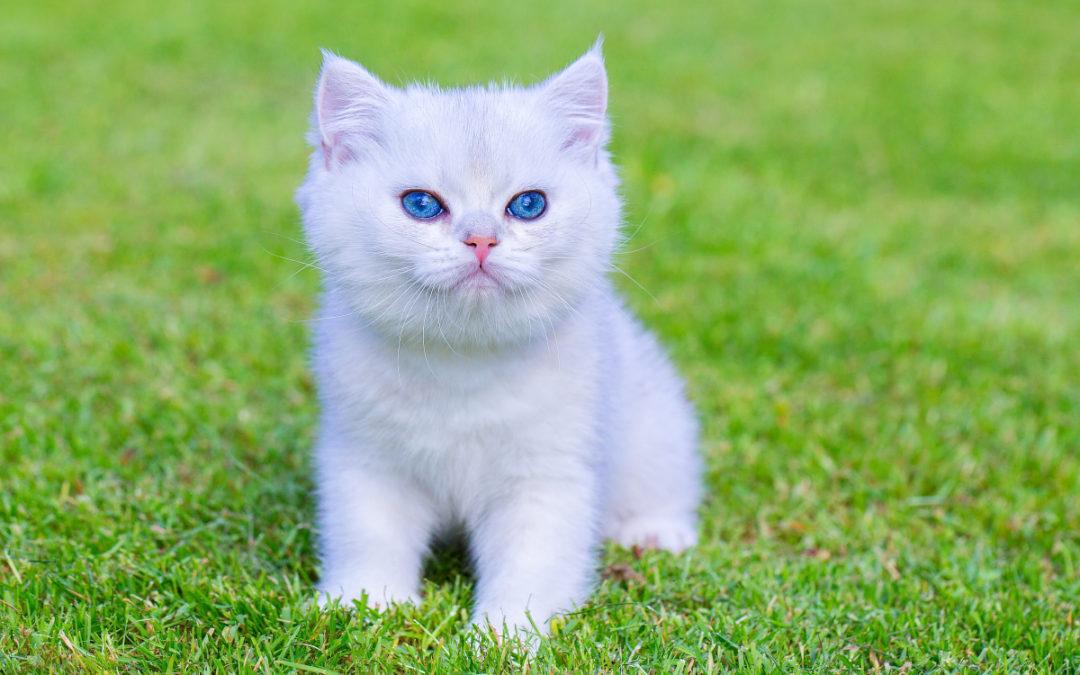 Jaka kuweta dla kota samoczyszcząca to dobry wybór w 2021 – Opinie oraz Ranking