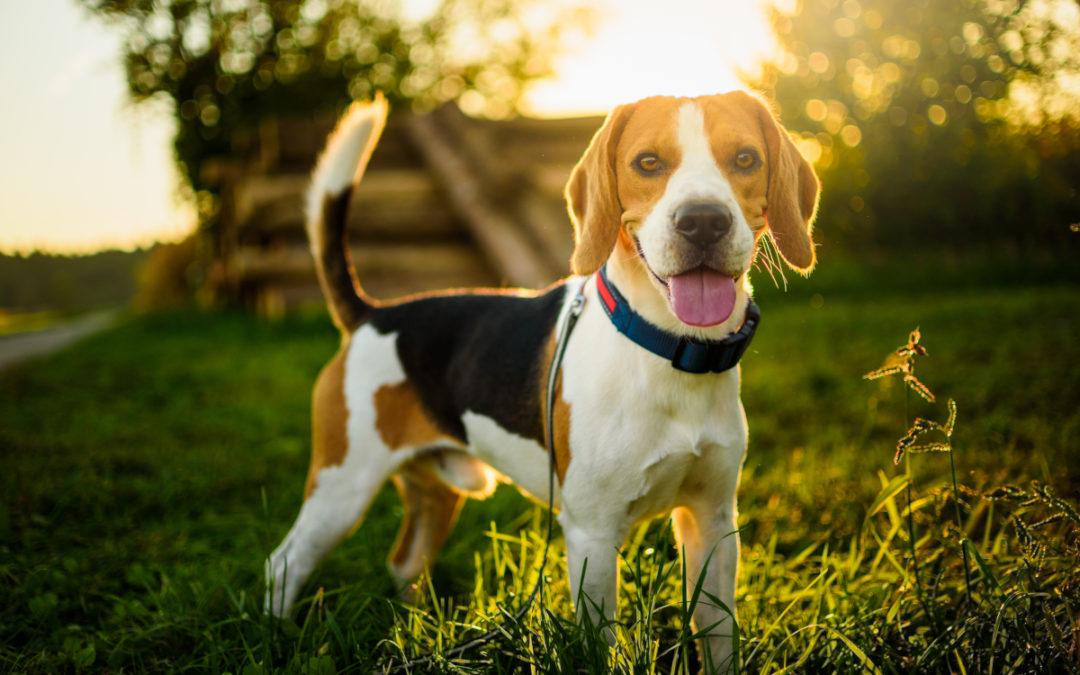 Jaki lokalizator GPS dla psa wybrać w 2021 – Opinie oraz Ranking