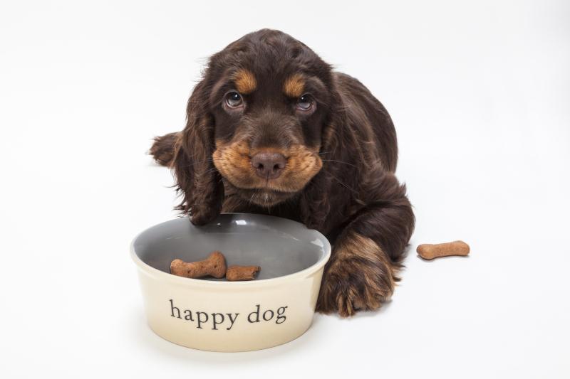 dobra mokra karma dla psa
