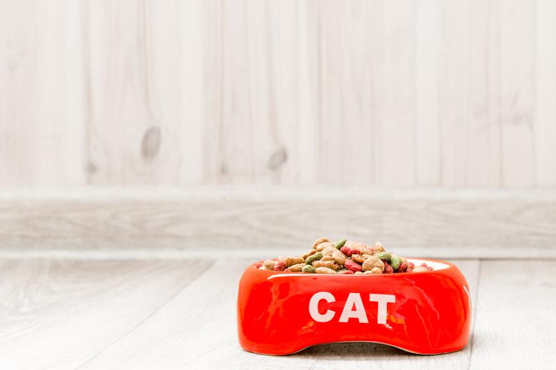 sucha karma dla kota opinie
