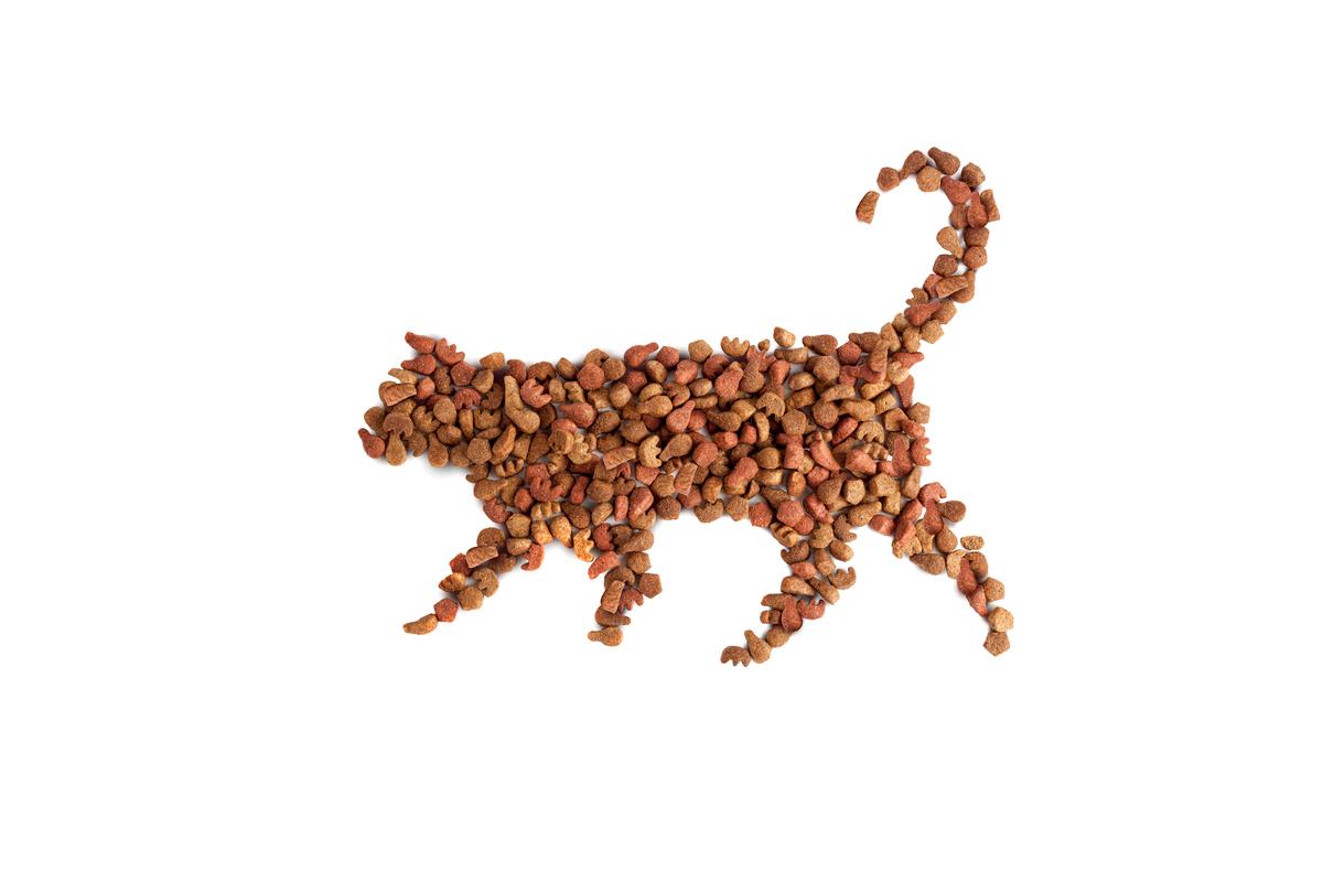 suche karmy dla kota ranking
