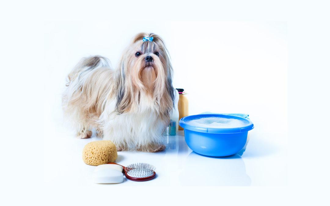 Jaki szampon dla psa wybrać w 2021 – Opinie oraz Ranking