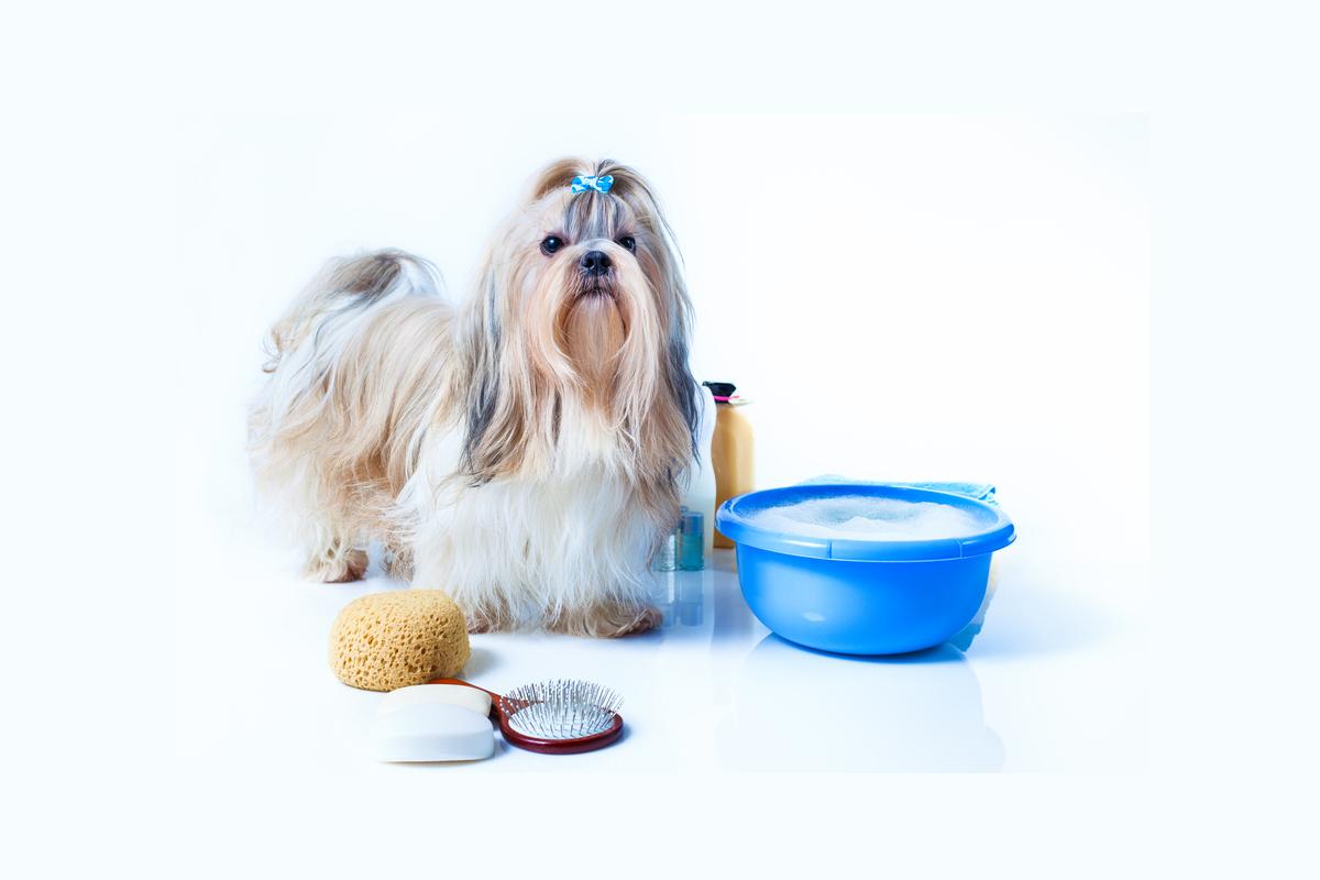 dobry szampon dla psa