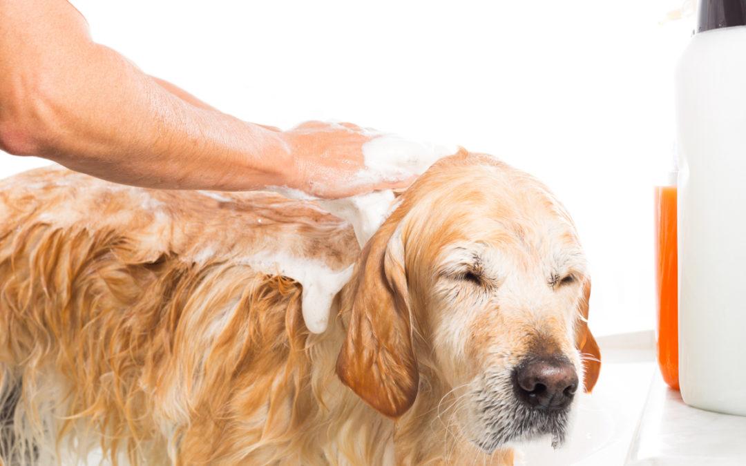 Jaki szampon dla szczeniaka wybrać w 2021 – Opinie oraz Ranking
