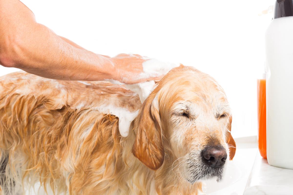 łagodny szampon dla szczeniaka