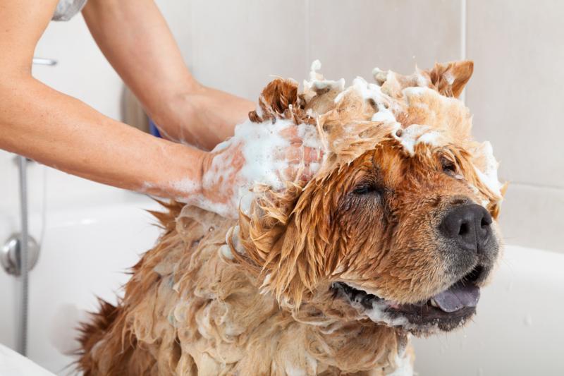 tani szampon dla szczeniaka