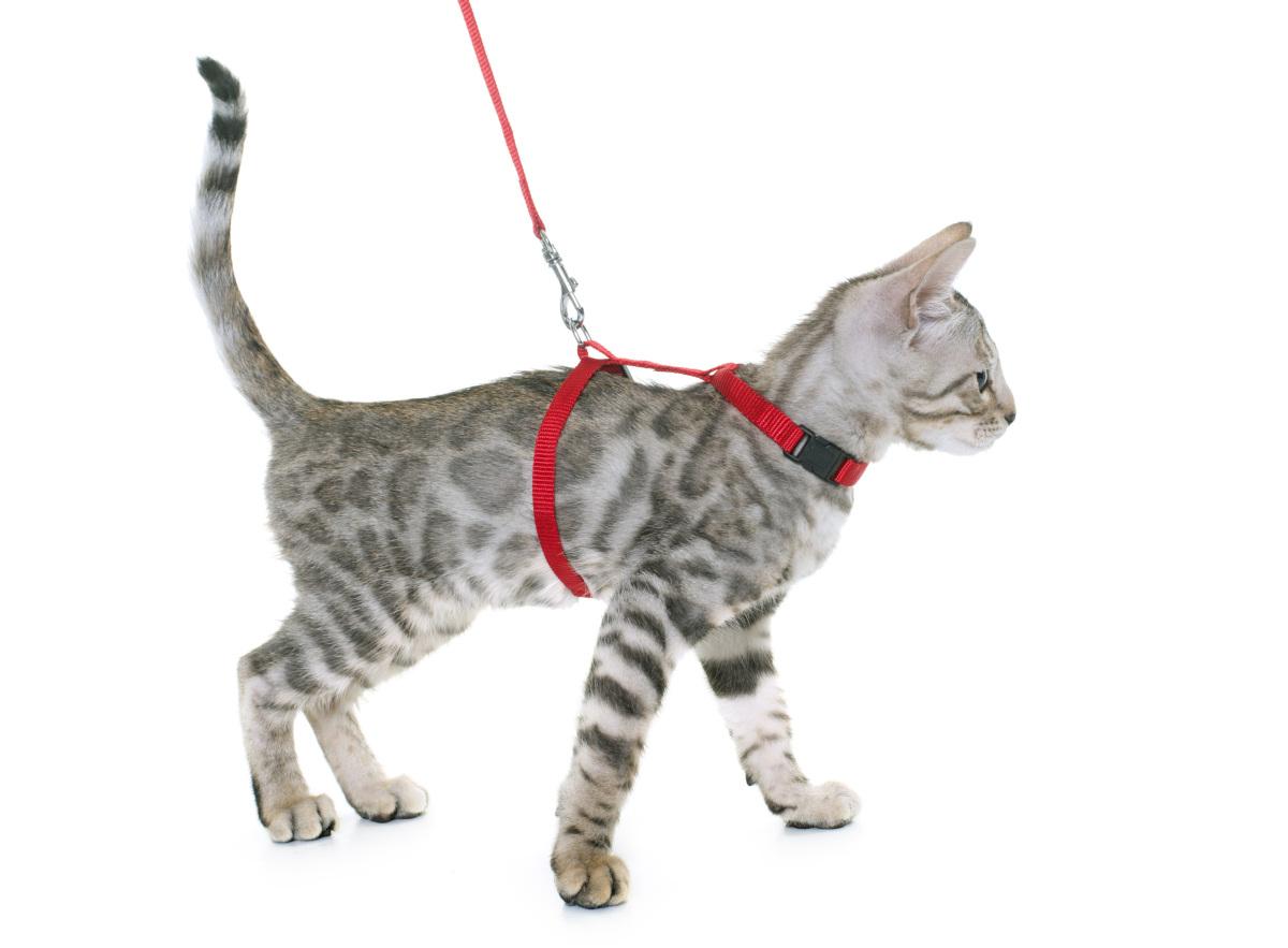 najlepsze szelki dla kota