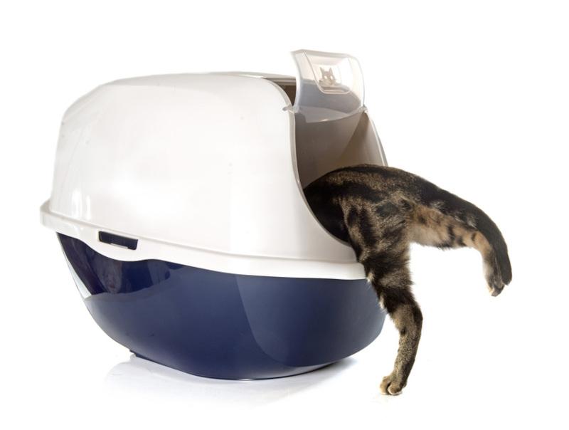 najlepszy żwirek dla kota