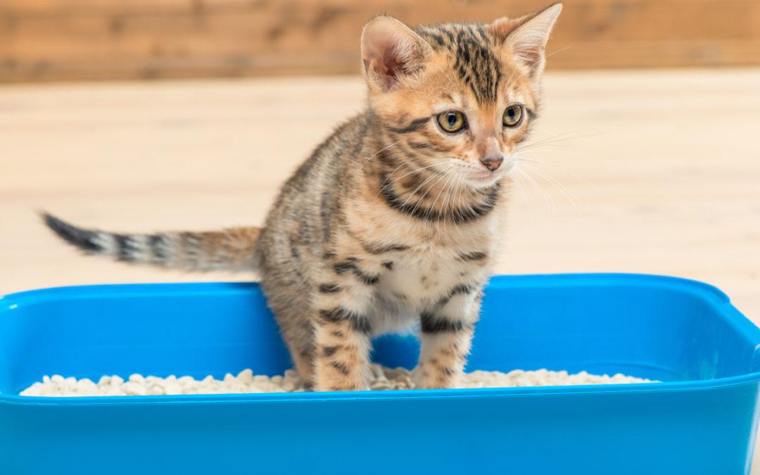 Jaki żwirek dla kota wybrać w 2020 – Opinie oraz Ranking