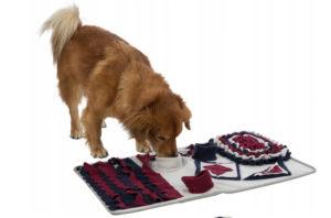 zabawki węchowe dla psa
