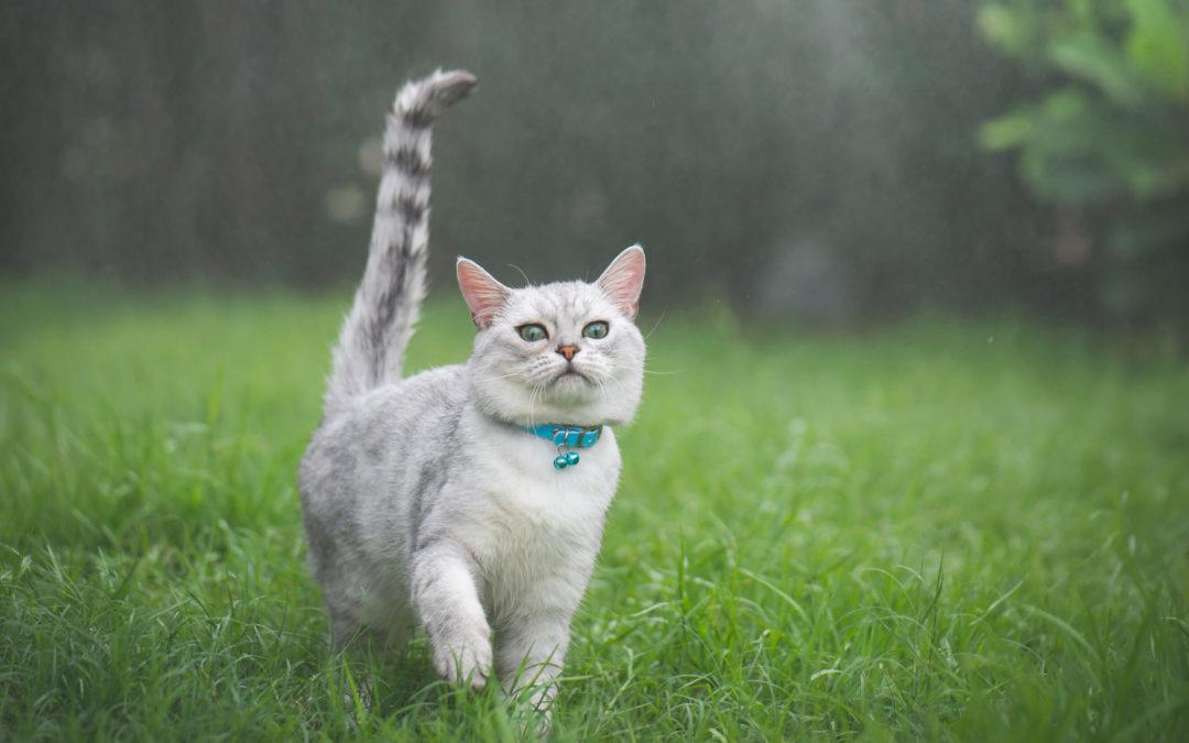Jak często odrobaczać kota?