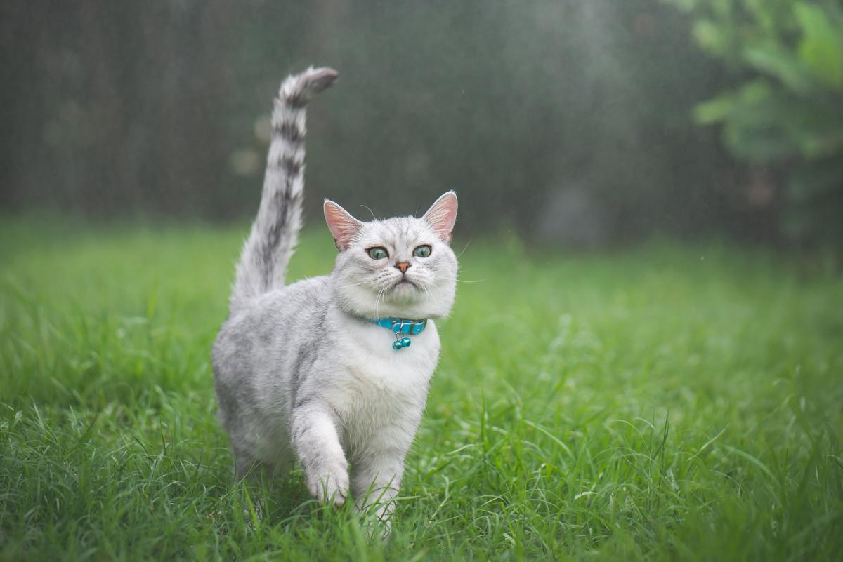 pierwsze odrobaczanie kota