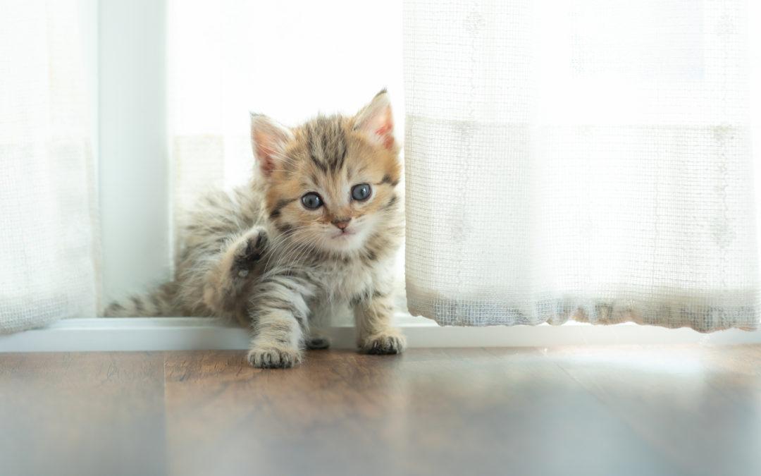 Jak oduczyć kota sikania w domu?