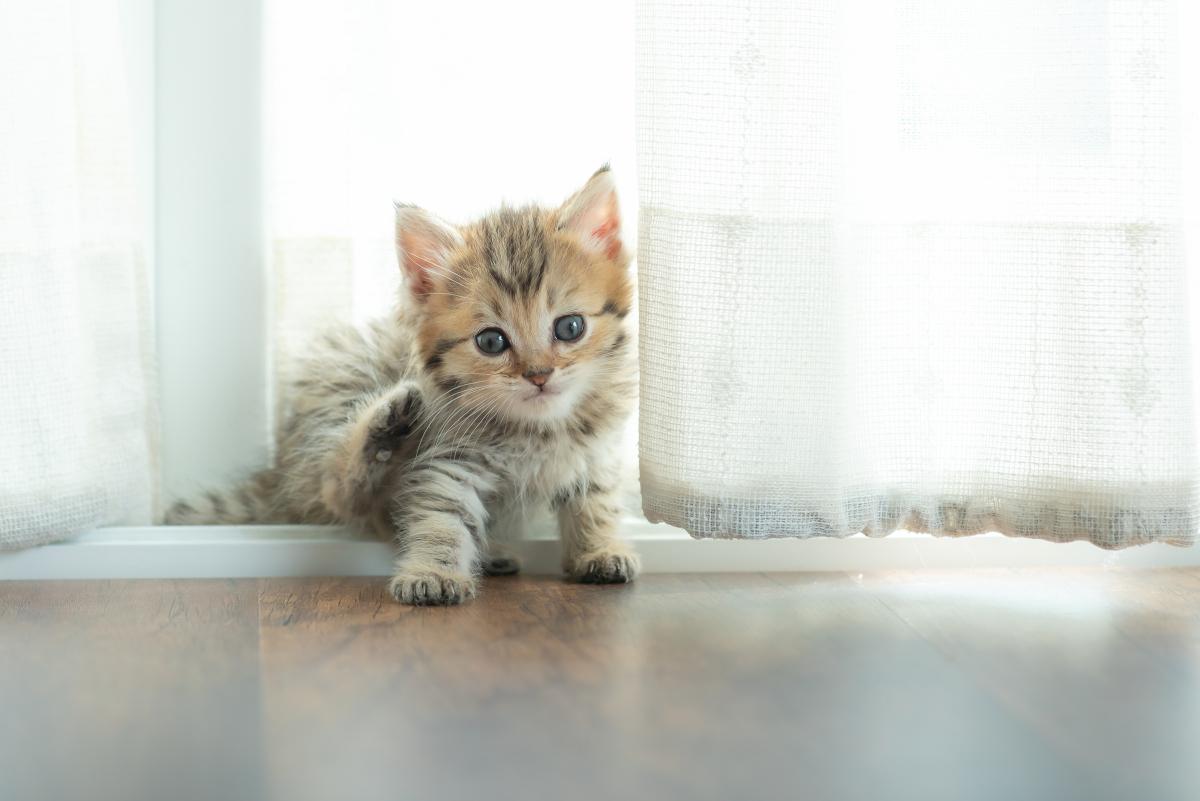 jak oduczyć kota załatwiania się poza kuwetą
