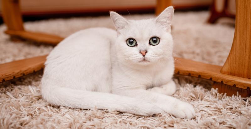 jak oduczyć kota znaczenia terenu w domu