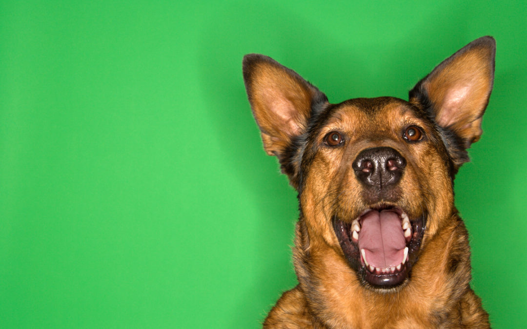 Jak oduczyć psa szczekania w domu – Poradnik
