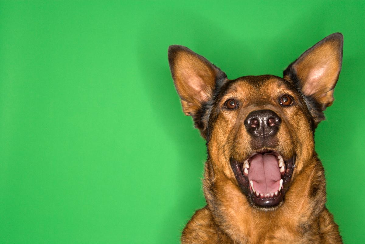 jak oduczyć psa szczekania