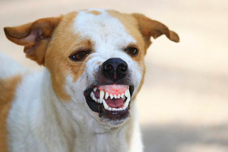 co zrobić żeby pies nie szczekał