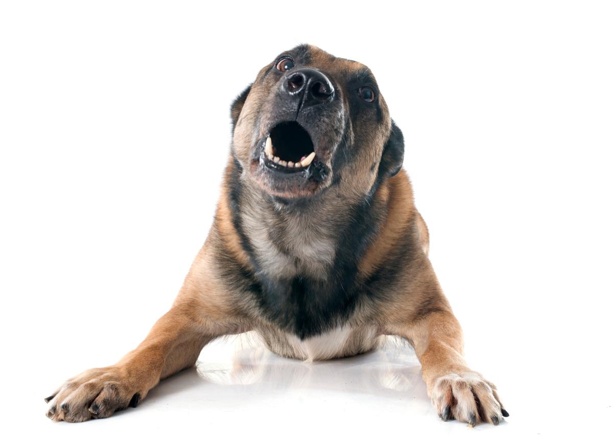 pies szczeka w nocy